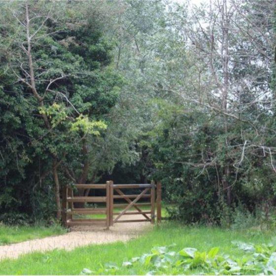 St Julian's Wood